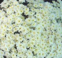 Dscf0234_flower