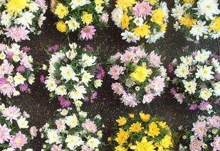 Dscf0235_flower