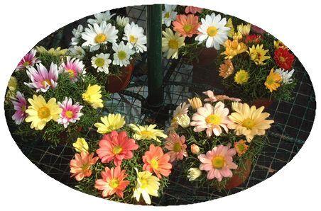 Dscf0238_flower